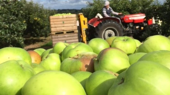 apple tractor