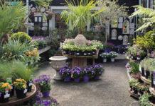 Doyle's Nursery & Garden Centre