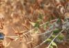 Xylella fastidiosa on trees