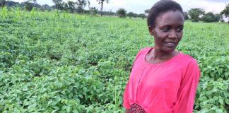 GOAL – Uganda: Stella Akwero at her GOAL-supported soybean garden in Northern Uganda. Credit: Thomas Hubert, Irish Farmers Journal.