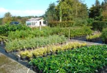 Fermoy Woodland Nurseries image