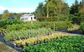 Fermoy Woodland Nurseries image