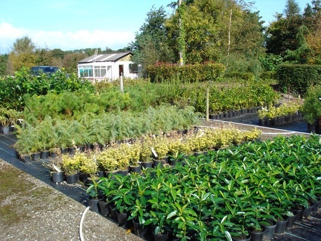 Nursery Foreman Fermoy Woodland Nurseries Ltd