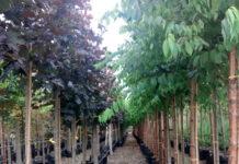 HSK plants