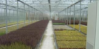 FitzGerald Nurseries Ltd image