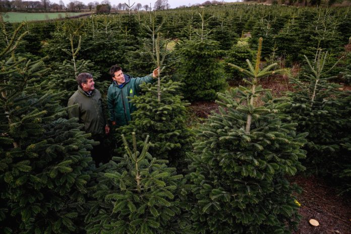 Minister of State for Food, Forestry and Horticulture Andrew Doyle with Dermot Page of Rathcon Christmas Tree Farm.