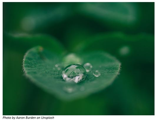 A drop of water in a plant leave
