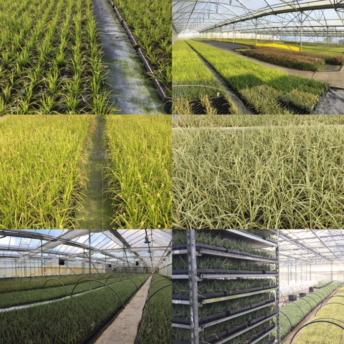 Nursery Propagation Operatives - Fitzgerald Nurseries -  HorticultureConnected.ie