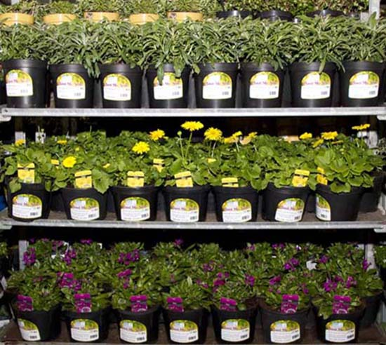Pots on trolley with IHNSA's new 'Plant me Now!' labels, at IHNSA Trolley Fair Kilkenny 26 Feb 2013
