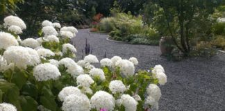Rathoath Garden Centre white flowers image
