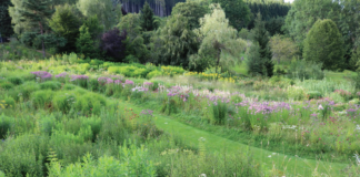 THE BOHEMIAN GARDEN AT BERCHIGRANGES, AN EXPERIMENT IN NATURE LED GARDENING.