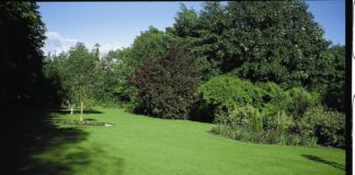 Johnsons Lawn