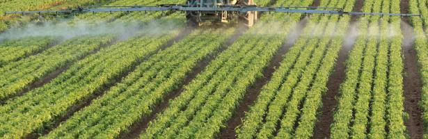 spraying pesticides on the field