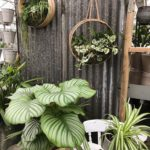Houseplants at Perrywood Garden Centre Tiptree.