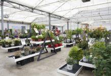 Garden Trials and Trade 2019 image