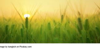 regenerative-farming-source