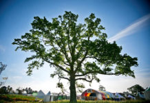 An image of a tree at Bloom Festival.