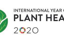 IYPH 2020-logo