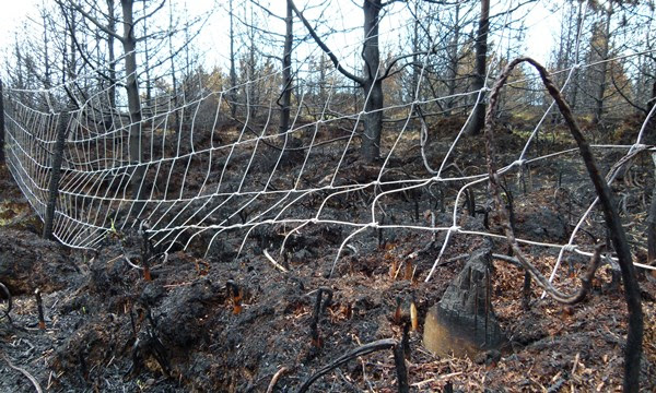 An image of a burnt forest.