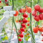 An autonomous greenhouse image