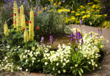 An image of a garden