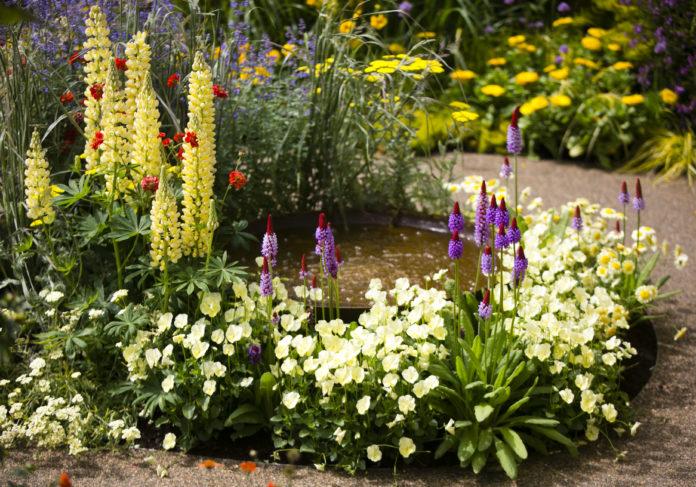 An image of a garden