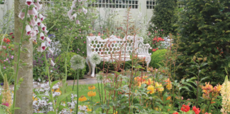 GREAT GARDENS ARE EFFORTLESS, OR AT LEAST THEY APPEAR TO BE SO. THEY DRAW YOU IN, FLOOD THE SENSES, LEADING THE EYE AND MIND THROUGH AN INTENDED NARRATIvE. GREAT GARDENS CREATE LASTING MEMORIES. THE EFFORTLESSNESS OF JANE'S 2012 GARDEN TELLS MANY STORIES, NOT LEAST OF WHICH WAS THE AMOUNT OF WORK PUT IN TO CREATE IT.