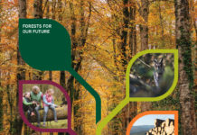 Coillte-Annual-Report-2019