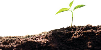 Image-2-Plant-Health-_-Biosecurity-Strategy-low