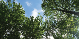An image of trees and the sky.